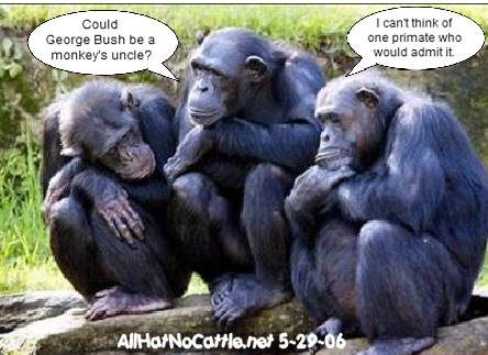 Chimp Chat All Hat No Cattle